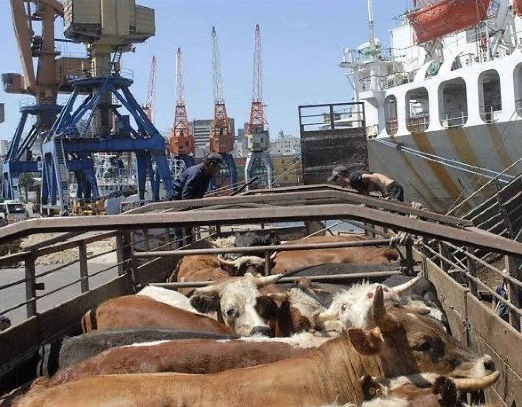 Irã vai importar gado vivo do Brasil | Portal Diário do Aço